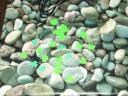 clover sprinkels