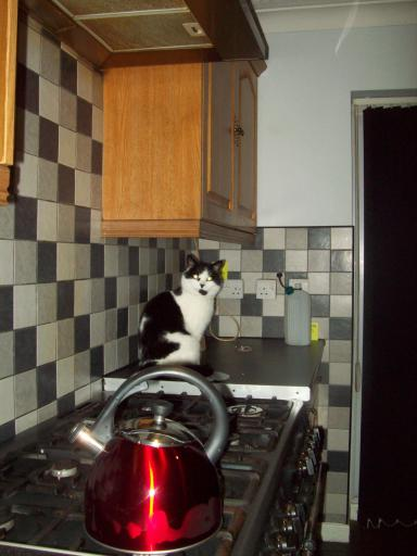 Kettle, cooker, cat