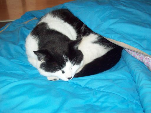 Cat in a sleeping bag