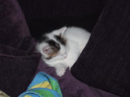 Sleepy kitten on the sofa