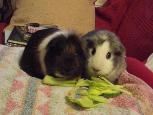Piggies enjoying some greens