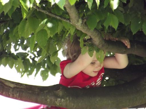 Mary climbing a tree