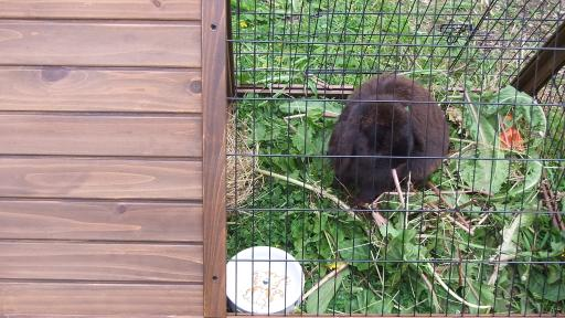 Bunnies tempery new home