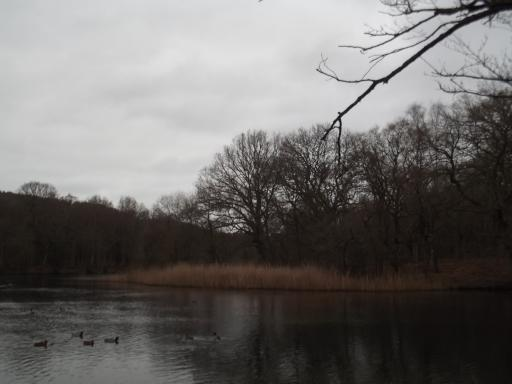 Lake in The Forest of Dean on New Years Day
