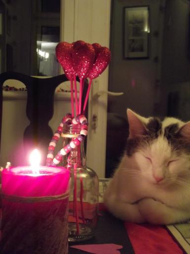 Rom Cat