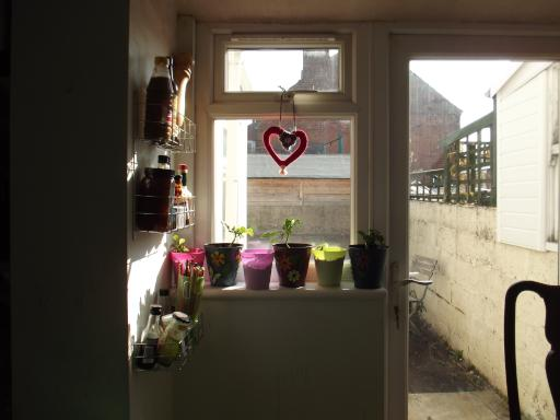 Chillies on the window sill