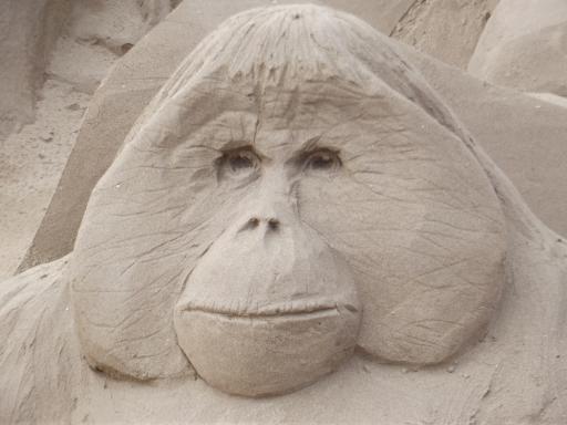orangotang in sand