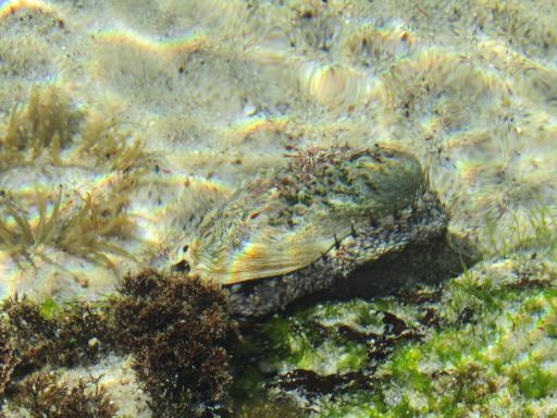 Clam South Africa