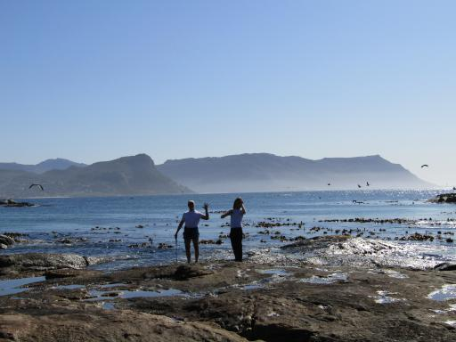 Finding the rockpools