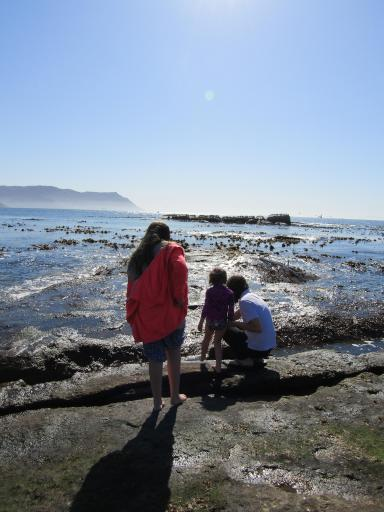 Looking in the rock pools