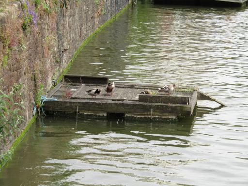 Birds in the harbour in bristol