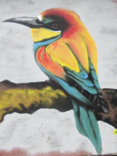 Close up of bird Graffiti