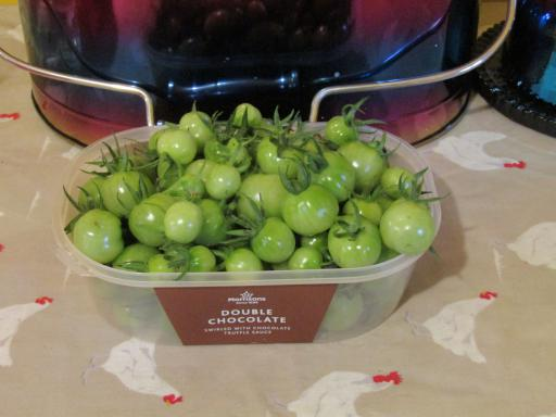 Late green tomatoes awaiting the chutney process