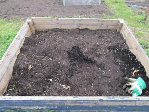 raised bed prepared for broad beans